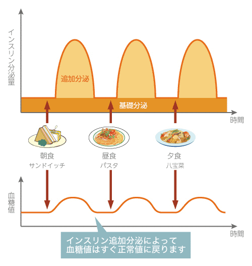 血糖値の一日の動きとインスリンの分泌